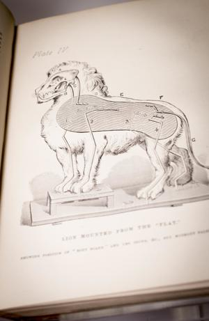 Closeup of a graphic of the side of a lion, showing a diagram of the lion on the inside.