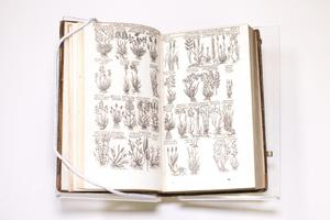 An open book showing two pages filled with several small drawings of plants on it.