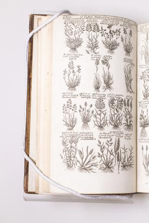 A page of a book with four rows of drawings of plants on it. Under the drawings are small titles for them.