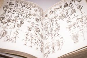 Open book showing two pages that are filled with several small drawings of plants.
