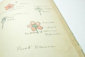 Un primer plano de 4 dibujos distintos de flores, con escritura y líneas que apuntan a varias partes de las flores.