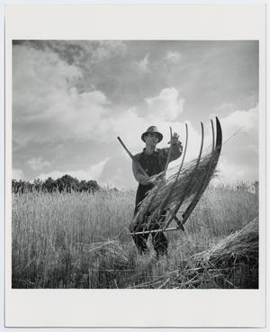 Primary view of object titled '[Wheat Harvest]'.