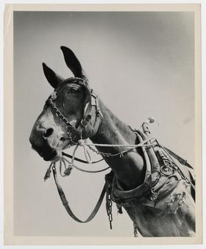 Primary view of object titled '[Mule Power]'.