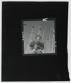 Primary view of object titled '[Sorghum Harvest]'.