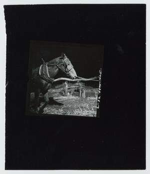 Primary view of object titled '[One Mule Power]'.