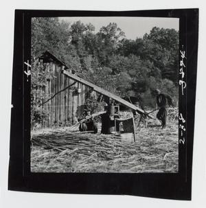 Primary view of object titled '[Grinding Sorghum Cane]'.