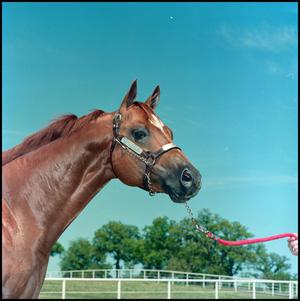 Brown horse is seen from its chest up. A hand is seen on the right side of the photo holding a red rope attached to the reigns of the horse.