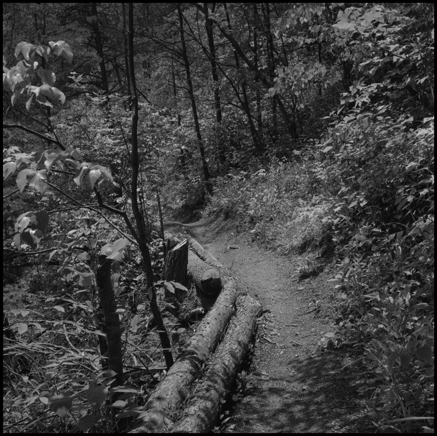 [Foot path], Photograph of a hilly trail through a wooded area. The path is lined with logs on one side.,