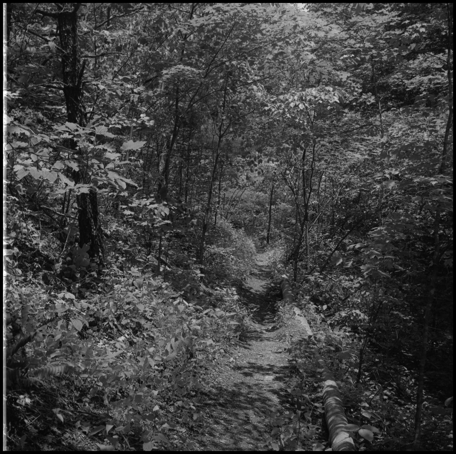 """[Wooded path], Photograph of a trail or path through the woods. The side of the trail is lined with logs to one side. The envelope containing the negative is inscribed with the word """"mood"""".,"""