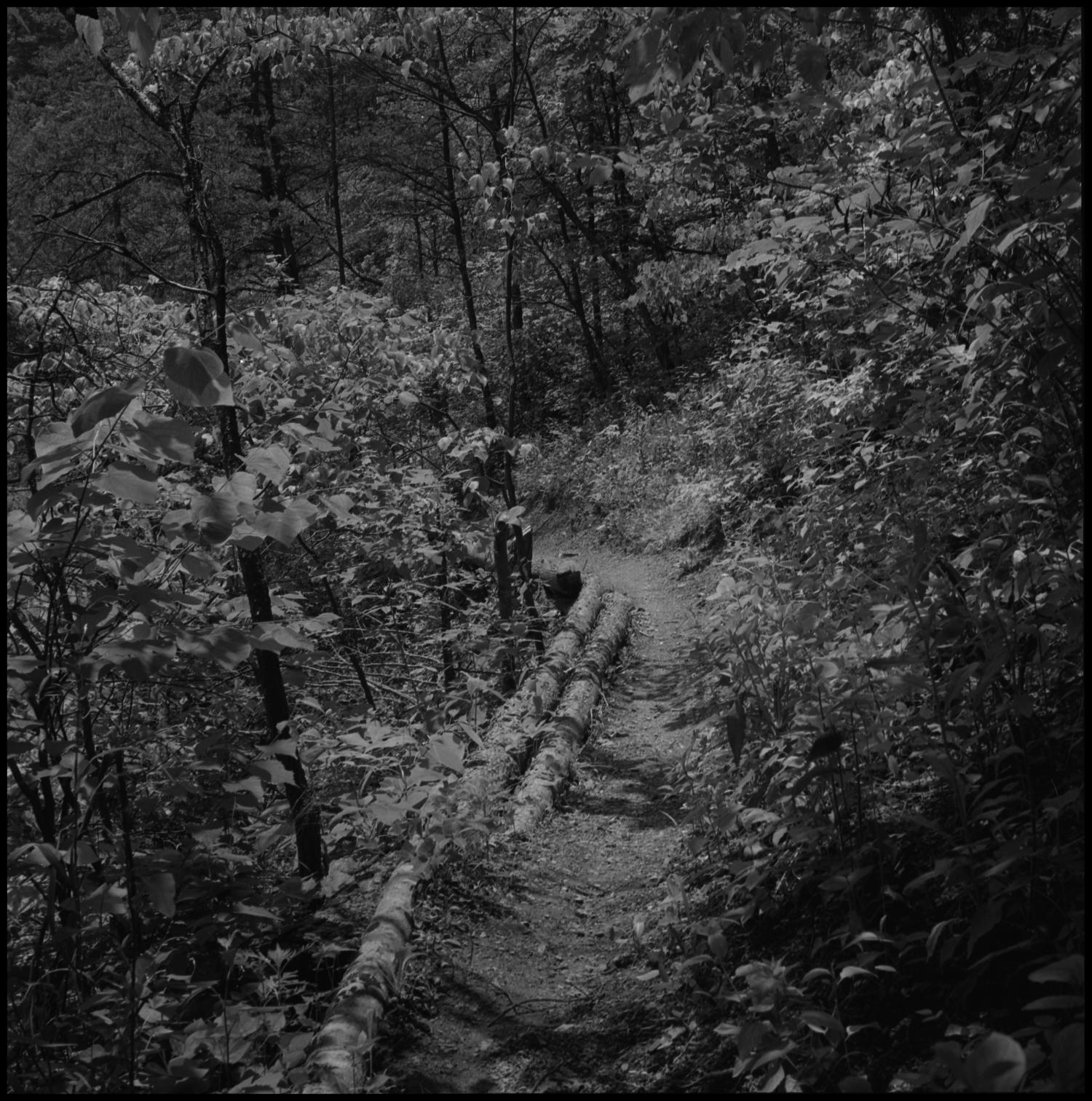[Foot path], Photograph of a path on a hill through a wooded area. The path is lined with logs on one side.,