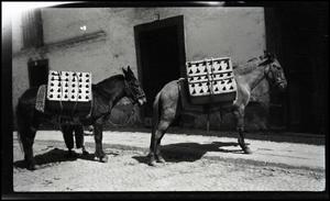 Primary view of object titled '[2 Donkeys]'.