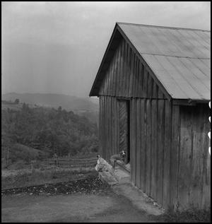 Primary view of object titled '[Dog outside Locust Grove School(1)]'.