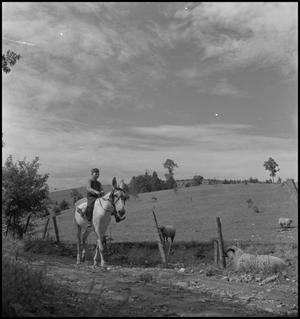 Primary view of object titled '[Riding Mule]'.