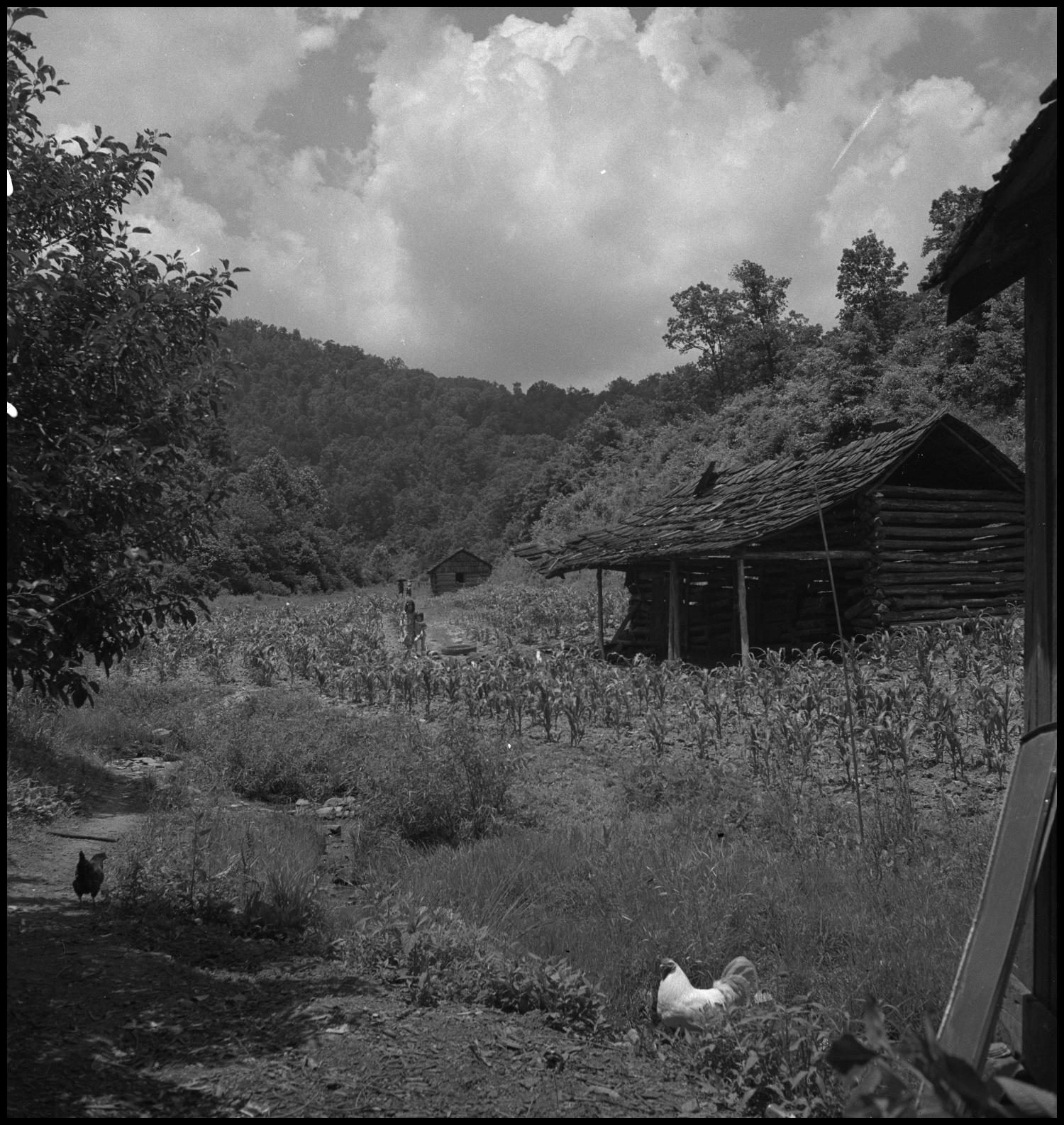 [Farm trails], Photograph of two girls walking down a harvested path by two homes. In the image, two more people can be seen walking further behind and two chickens are on the other side of the fence close to the camera. The homes are made of wood and sit in the valley of two large mountains.,