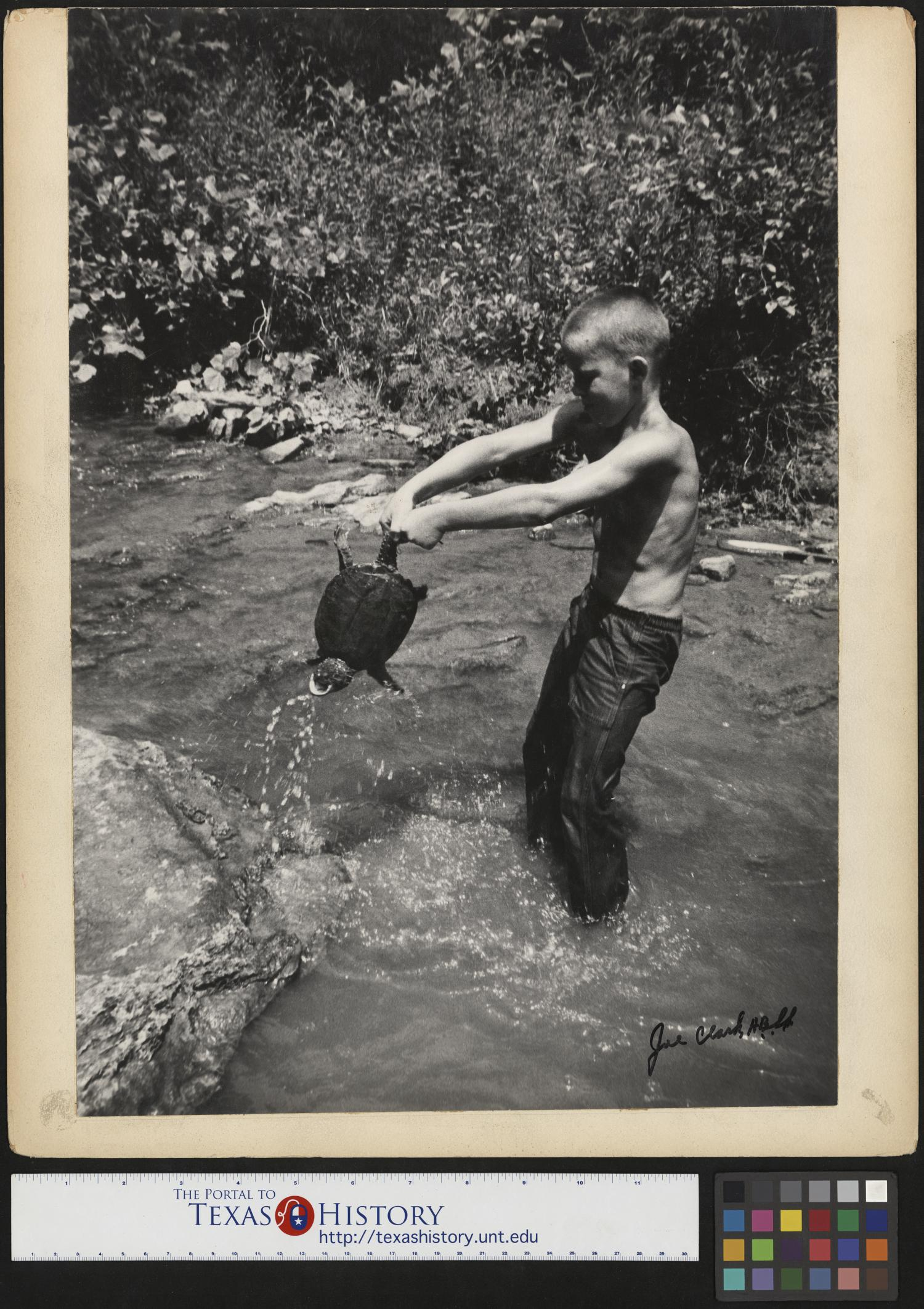 [Jimmy Powell Catches a Snapping Turtle], Photograph of Jimmy Powell catching a snapping turtle with his bare hands in Keg Branch, a creek, in Cumberland Gap, Tennessee. He wears pants, but no shirt, and he holds the turtle by the tail. Rocks and foliage line the sides of the creek. Photo by: Joe Clark, HBSS. Signed by: Joe Clark, HBSS Clark PhotoFile: 9276-0002-19,