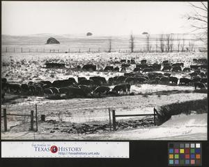 Primary view of object titled '[Herd of Cattle]'.
