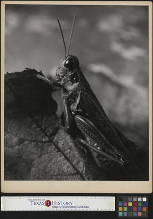 Primary view of object titled '[Grasshopper]'.