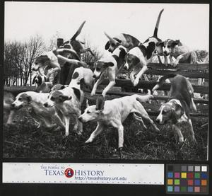 Primary view of object titled '[Fox Hounds Leaping over a Rail Fence]'.