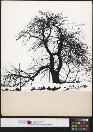 Primary view of object titled '[The Old Apply Tree]'.