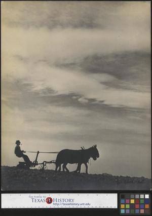 Primary view of object titled 'Pappa on disc harrow'.