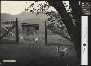 Primary view of object titled '[The Gate to Grandpa's Outhouse (4)]'.