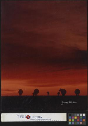 Primary view of object titled '[Cattle at sunset]'.
