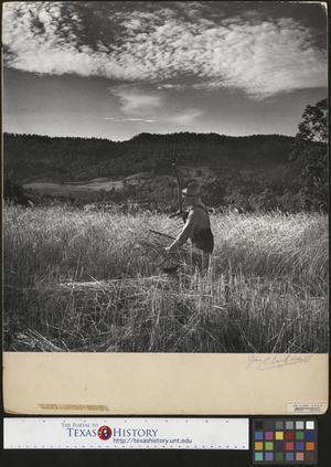 Primary view of object titled '[Man Working in Field]'.