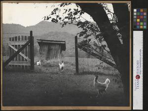 Primary view of object titled '[The Gate to Grandpa's Outhouse (2)]'.
