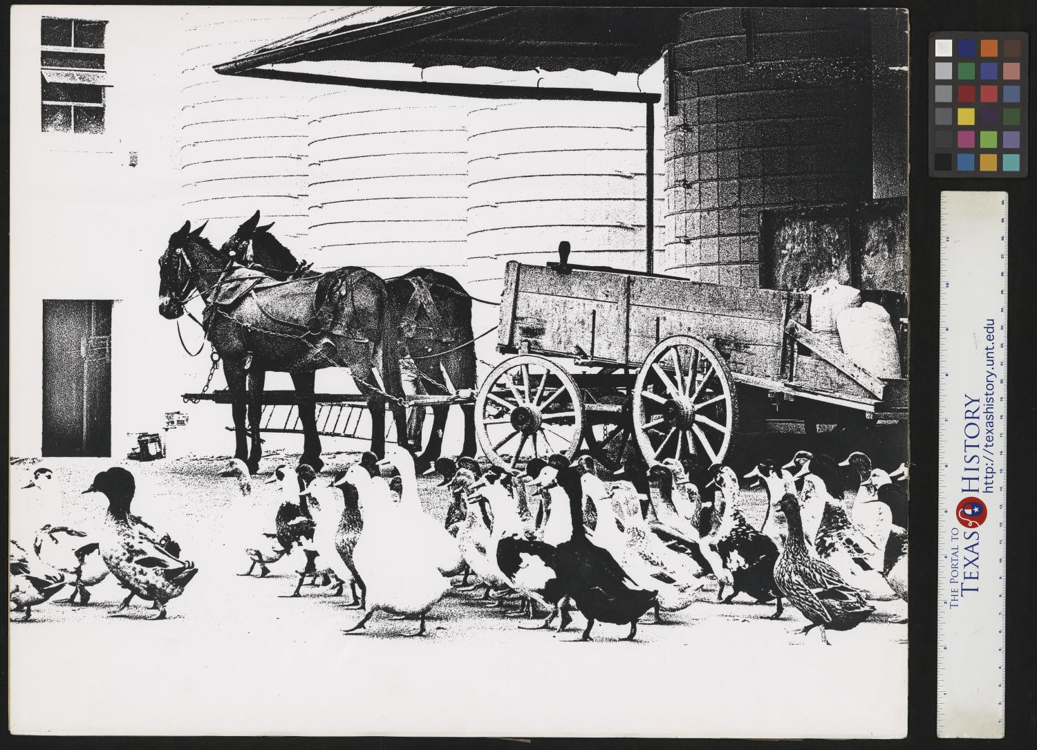 """[Ducks and horse-drawn cart (1)], Photograph of two horses attached to a cart at the base of silos. There is a group of ducks in the foreground. Narrative by Junebug Clark: Corn being delivered to the Jack Daniels Distillery grain silos always attracts a herd of ducks from the nearby creeks and ponds. This print was created using Joes """"Impro"""" technique. A process that drops mid-tones from and image. Photo by: Joe Clark, HBSS. Signed by: Joe Clark, HBSS Clark PhotoFile: 7305-4 impro,"""
