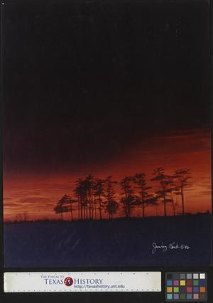 Primary view of object titled '[Trees in the sunset]'.
