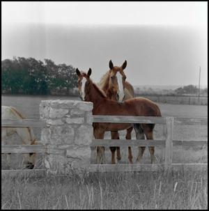 Primary view of object titled '[3 horses next to fence]'.