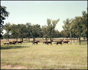 Primary view of object titled '[Horses running in pasture]'.