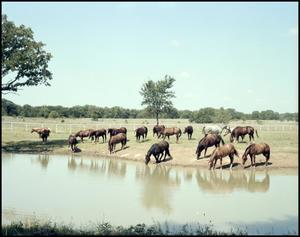Primary view of object titled '[Horses at pond]'.
