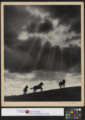 Primary view of object titled '[Silhouetted Horses at Sunset]'.