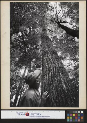 Primary view of object titled '[Joe Clark, HBSS sighting up a tree]'.