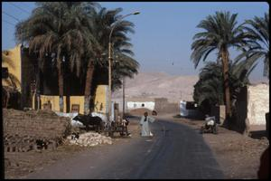 Primary view of object titled 'Homes, farming - West Bank'.