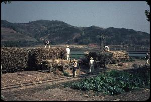 Primary view of object titled 'Sugar cane loading enroute to Sun Moon Lake'.