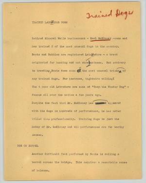 Primary view of object titled '[News Script: Trained Labrador dogs]'.