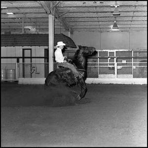 Primary view of [Cowboy riding in the Cutter Bill Arena]
