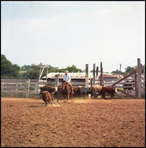 Primary view of [Fred Powell riding Molly Q Cee]