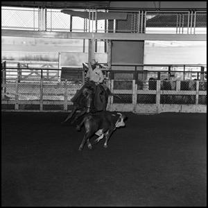 Primary view of object titled '[Cowboy in cutting practice at Cutter Bill Arena]'.