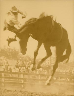 A horse is high up in the air, a man higher up above him holds onto the horse.