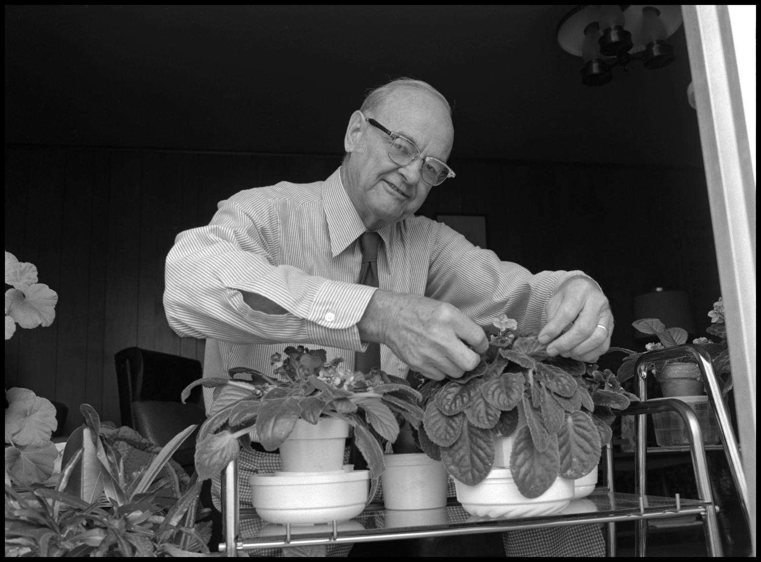 [Garland Brookshear arranging leaves], Photograph of Garland Brookshear, a member of the Management faculty at NTSU, adjusting the leaves on one of his potted plants. There are several close to the window. Brookshear is being photographed for his retirement.,