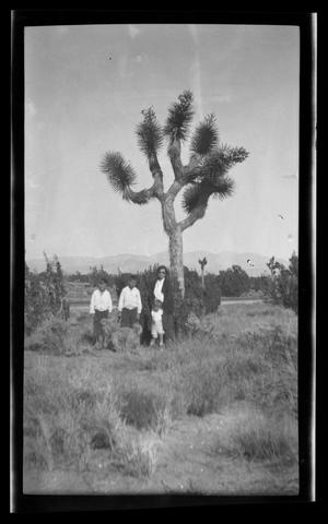 Primary view of object titled '[The Williams family standing in front of a Joshua Tree]'.