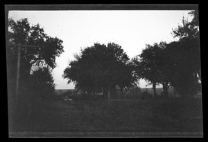 Primary view of object titled '[Photo of trees and a fence]'.