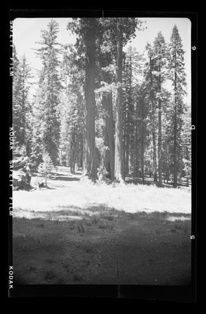 Primary view of object titled '[Landscape at Yosemite National Park]'.