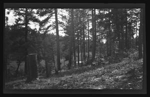 Primary view of object titled '[Photo of a forest with two girls sitting in the background]'.