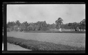 Primary view of object titled '[People walking in a park]'.