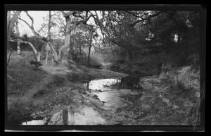 Primary view of object titled '[Photo of a stream in a forest]'.