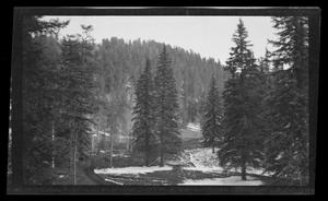 Primary view of object titled '[Photo of a landscape with pine trees]'.